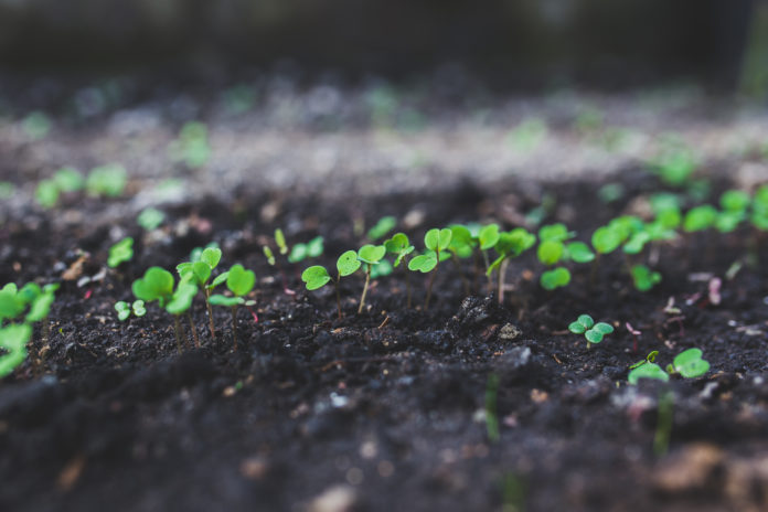 Finding new ways to grow your small business is crucial